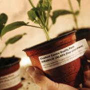 Oferta dla branży ogrodniczej